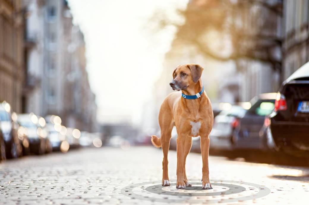 Mit einem GPS-Tracker wissen Sie immer, wo Ihr Hund gerade ist.