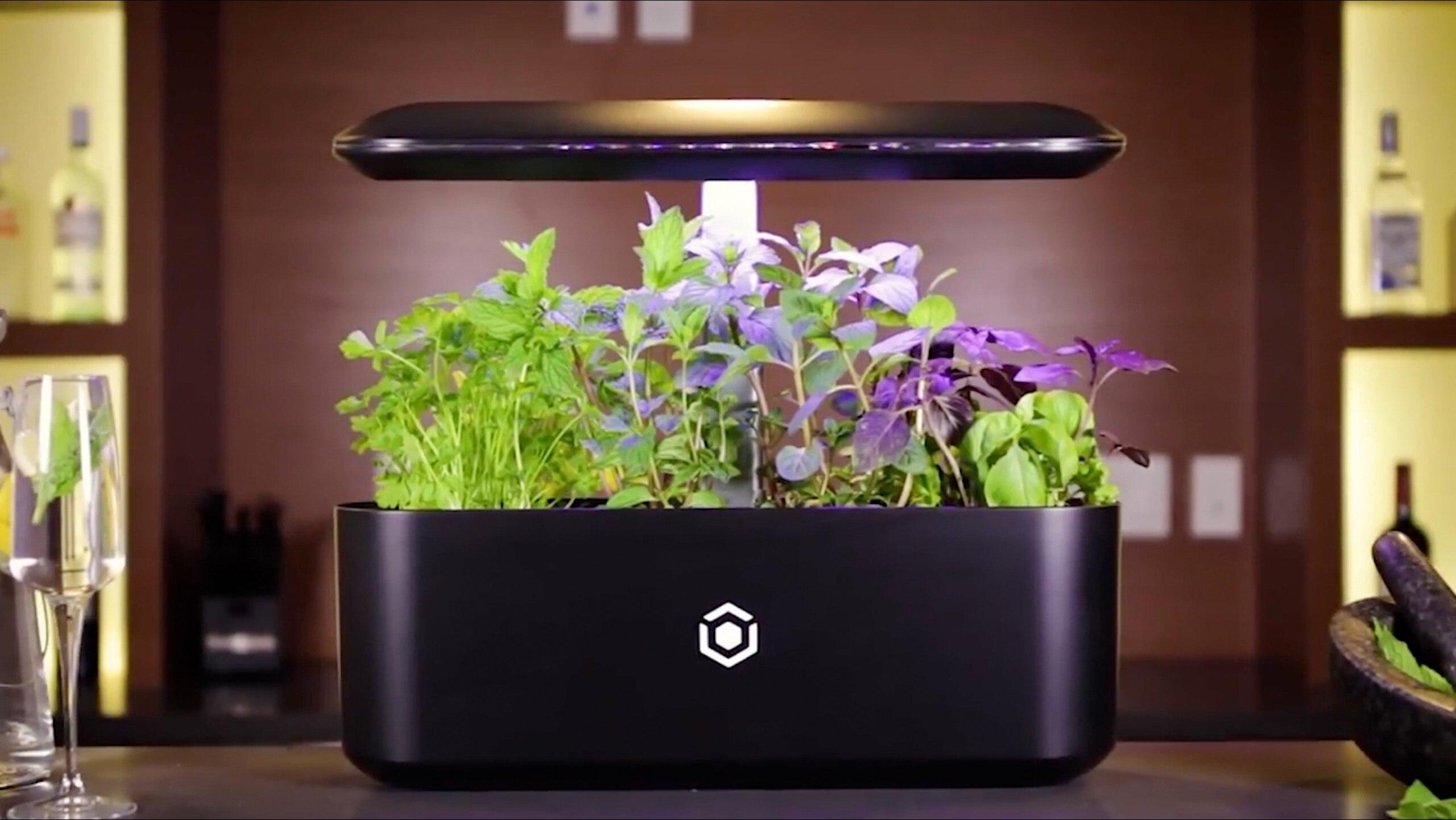 smarter blumentopf lässt pflanzen schneller wachsen | techbook