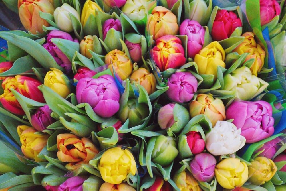 WhatsApp Geburtstagsgrüße: Ein Strauß bunter Tulpen von oben